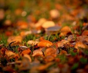 Ноябрь - сентябрю внук, октябрю сын, - а зиме родной брат!
