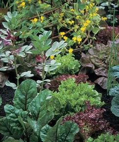 Участок с каким рельефом лучше всего подойдёт для огорода?