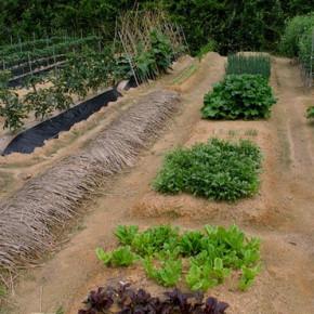 Какие растения поглощают с почвы мало питательных веществ?