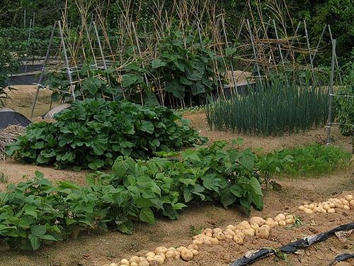 Какие растения найбольше поглощают питательные вещества из почвы