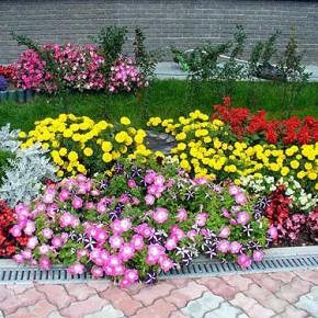 Выращивание лилий:как удобрять растения