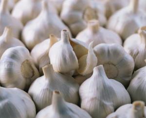 выращивания озимого чеснока