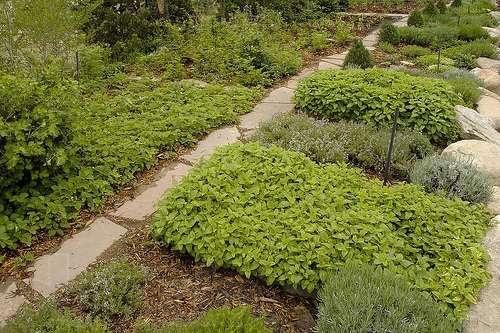 С какой стороны лучше всего растут растения