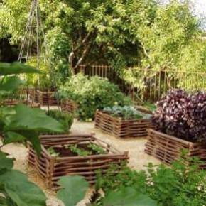 Схема размещения плодово - ягодных и овощных растений на приусадебном участке