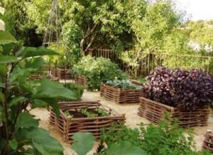 Расположение плодового сада