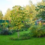 Как правильно размещать овощные культуры на приусадебном участке