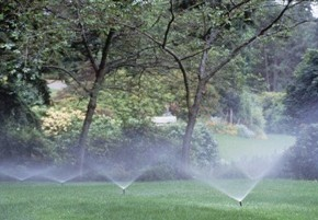 Как вносить химические удобрения  под плодовые деревья?