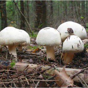 Какая температура нужна для выращивания грибов?