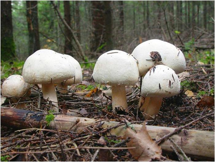 Какая температура нужна для выращивания грибов