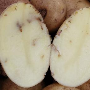 Как распространяется картофельная моль