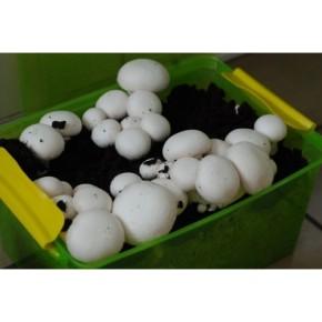 Какие минеральные вещества должны быть в компосте для грибов?