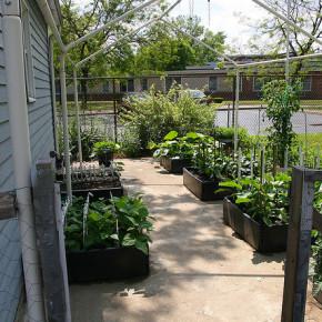 Почему не растут растения на огороде?