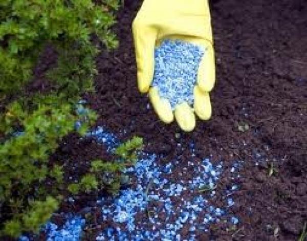Какие минеральные удобрения наиболее часто используют