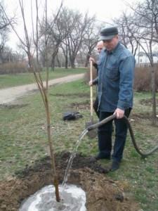 Полив деревьев