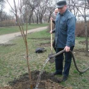 Как поливать деревья перед зимовкой