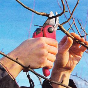 Формирование дерева:обрезка ветвей