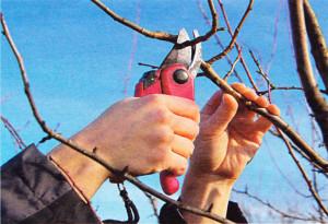 Формирование дерева