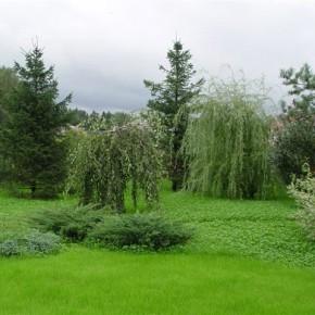 Как подобрать декоративные растения для сада , учитывая их будущий размер через несколько лет?