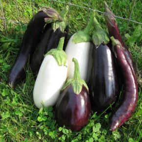 Мульчирование томатов:положительные и отрицательные стороны