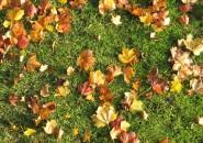 Когда нужно подсевать газоны?