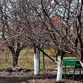 Плодовые деревья на даче:чем удобрять