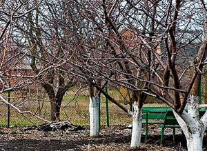 для плодовых деревьев