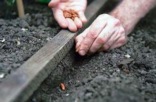 Как проводить подзимний посев