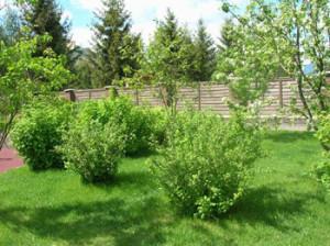 Зачем мульчировать приствольные круги плодовых деревьев