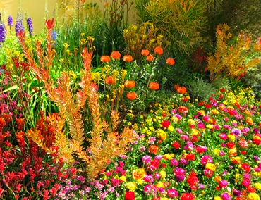 Какие цветы высаживать во второй половине октября