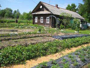 Сколько навоза нужно вносить на огород