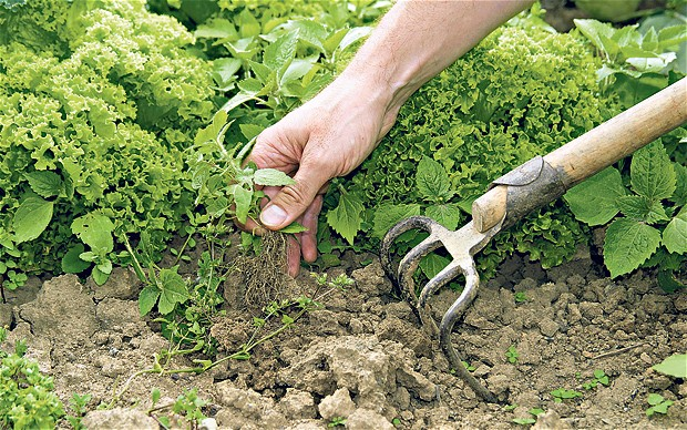 недостаток питательных веществ в почве