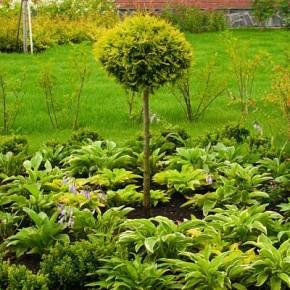 Огород  на заднем плане гармонично дополняет зеленый массив приусадебного участка