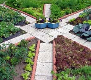 Какие огородные культуры нужно сажать возле горчицы?