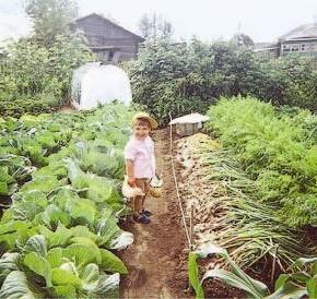 Почему нельзя выращивать одни и те же овощи на одном месте?