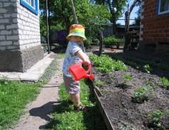 огород в жаркую погоду