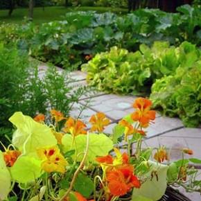 Главные правила гармоничного размещения огородних культур