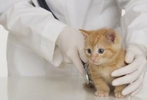 Нужно ли обращаться к ветеринару