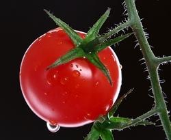 томаты плохо растут