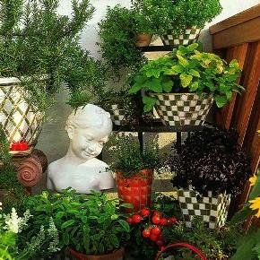 Выращивание сенполии зимой:уход и полив