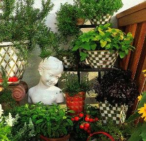 Выращивание сенполии зимой