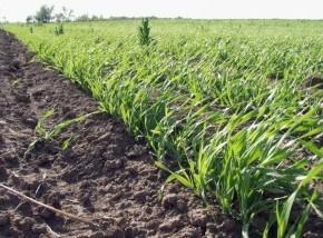Преимущества и недостатки органического земледелия