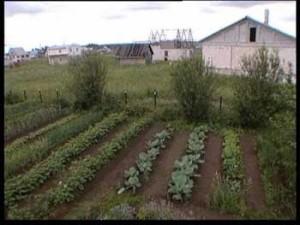 чередовать овощные культуры