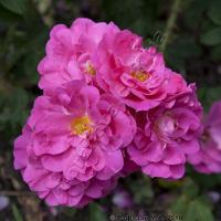 уберечь цветы от грибковых заболеваний