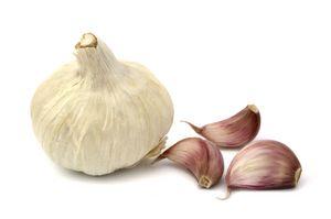 Какой сорт чеснока самый урожайный