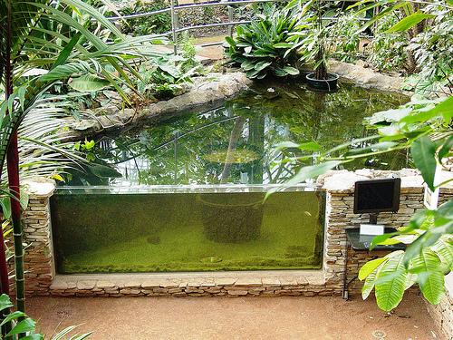 1000 images about water feature on pinterest vivarium for Aquarium fish outdoor pond