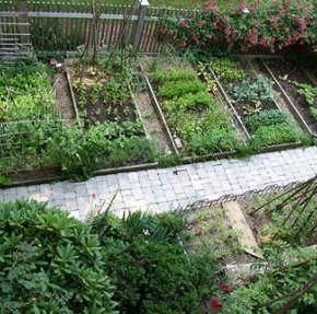 Какие овощи нельзя сажать рядом на огороде?