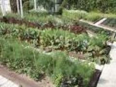 одни и те же овощи на одном месте