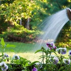 Сколько влаги нужно овощным растениям для нормального роста и развития?