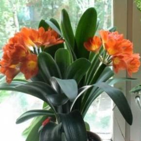 Как правильно подкармливать комнатные растения зимой?
