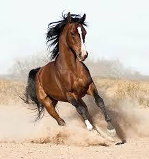Как лечить наминкам у лошади